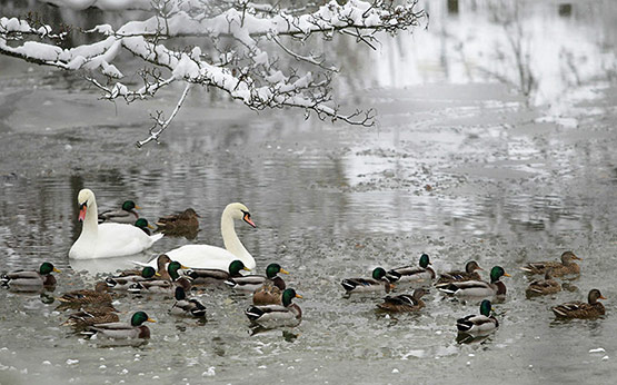 24 of 25, Attractive Snow Pictures of UK 2010