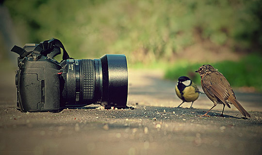 Where the birds come from...
