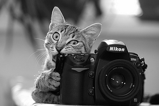 Photographer called?