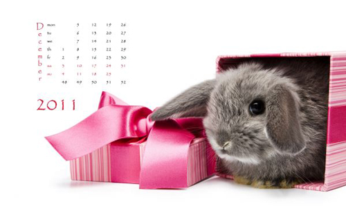 happy new year rabbit wallpaper 40+ High Quality Colorful 2011 New Year Wallpapers