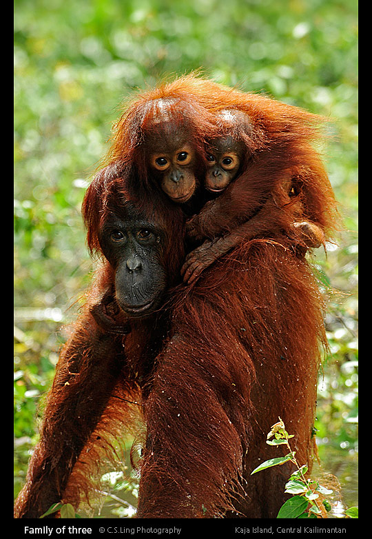 Love: Mother and Child