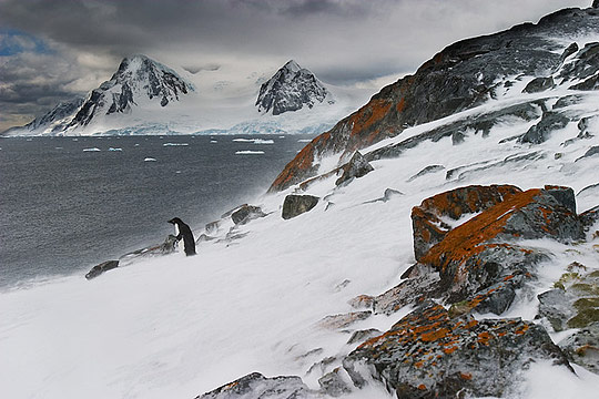 The Antarctic Cold