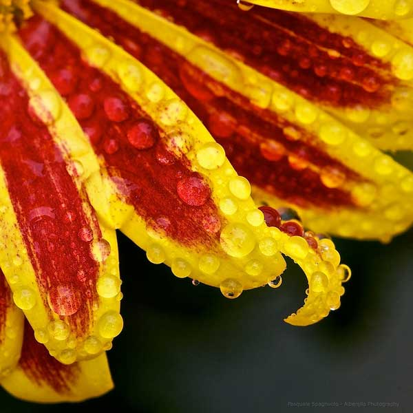 50 Inspirational Examples of Flower Photography