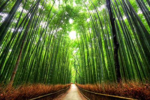 Bamboo Forest Kyoto - Landscape Photography