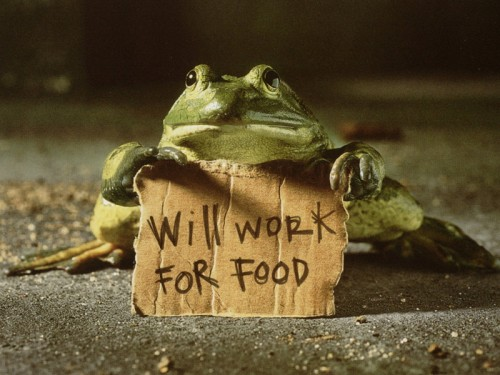 _frog-with-sign-_1280x1024