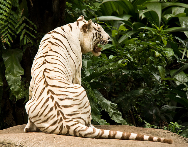 Breathtaking-Photography-Of-Big-Cats