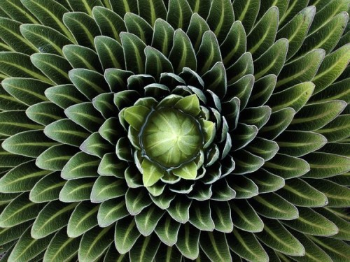 patterns-in-nature-20
