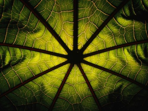 patterns-in-nature-32