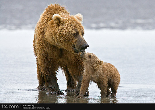 Mother and Cub...