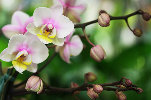 11 beautiful orchid in 40 Amazing and Beautiful Pictures of Flowers