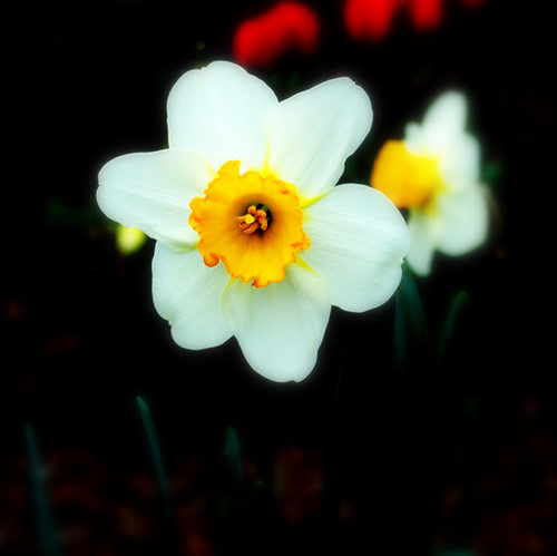 12 white flower in 40 Amazing and Beautiful Pictures of Flowers