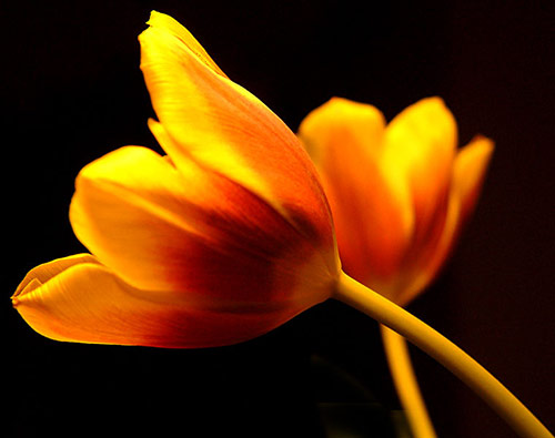 14 flowers in 40 Amazing and Beautiful Pictures of Flowers