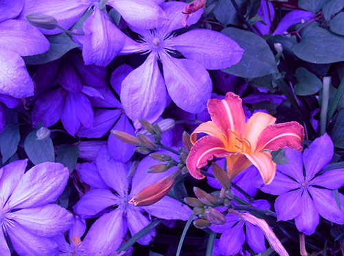 15 flowers in 40 Amazing and Beautiful Pictures of Flowers