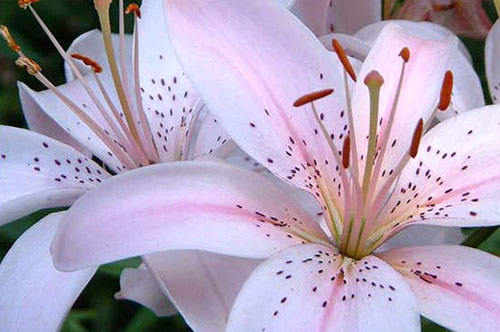 16 flowers pictures in 40 Amazing and Beautiful Pictures of Flowers