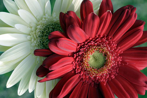 19 flowers in 40 Amazing and Beautiful Pictures of Flowers