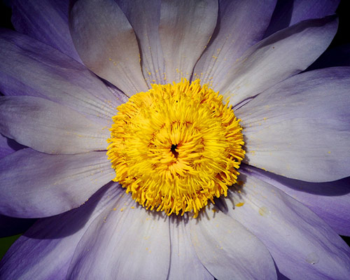 20 flower in 40 Amazing and Beautiful Pictures of Flowers