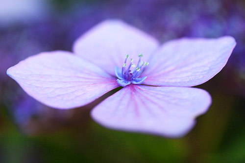 21 a lazy summer afternoon in 40 Amazing and Beautiful Pictures of Flowers