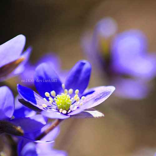 26 blue flowers in 40 Amazing and Beautiful Pictures of Flowers