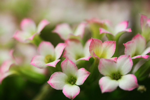 30 affairs of the heart in 40 Amazing and Beautiful Pictures of Flowers