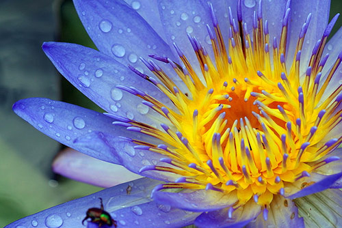 35 water lily in 40 Amazing and Beautiful Pictures of Flowers