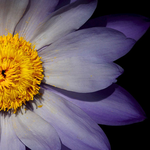 9 purple flower in 40 Amazing and Beautiful Pictures of Flowers