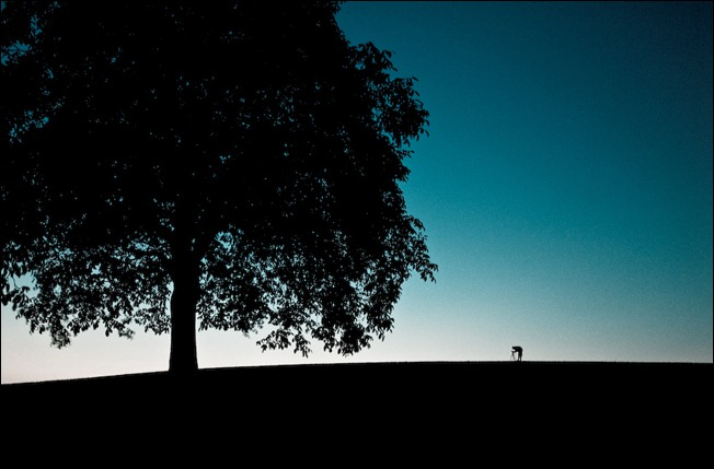 Magnificent Silhouette Photography