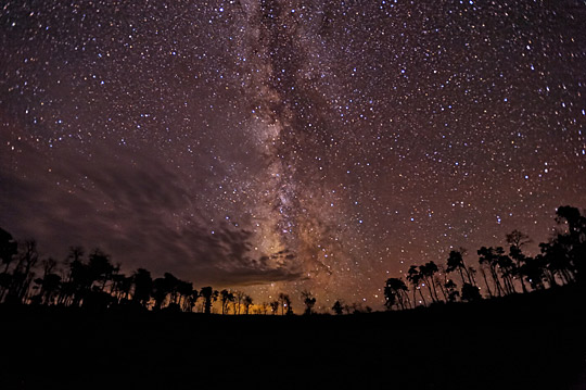 Seeing the Universe Above the Forest