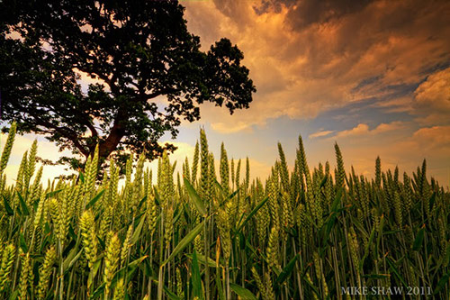 Born of Spring in Amazing Landscape Photography by Mike Shaw (40 Pictures)