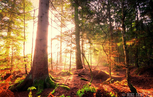 Forest Light II in Amazing Landscape Photography by Mike Shaw (40 Pictures)
