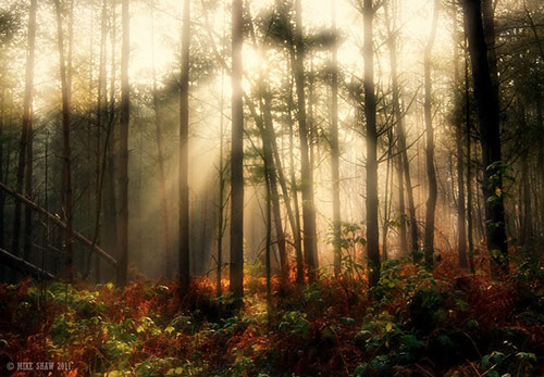 Lush II in Amazing Landscape Photography by Mike Shaw (40 Pictures)