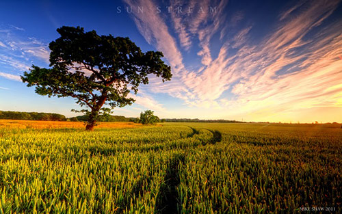 Sun Stream in Amazing Landscape Photography by Mike Shaw (40 Pictures)
