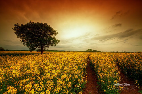 Yellow Storm in Amazing Landscape Photography by Mike Shaw (40 Pictures)