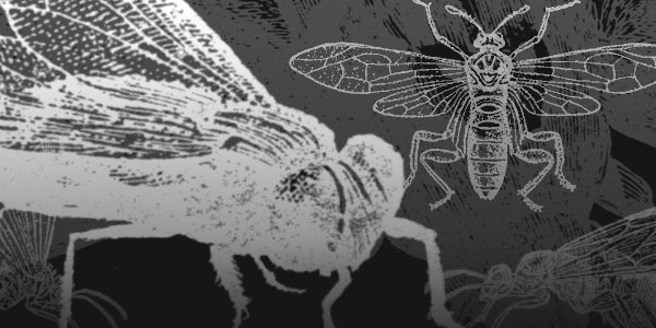 Insect Brushes for Photoshop
