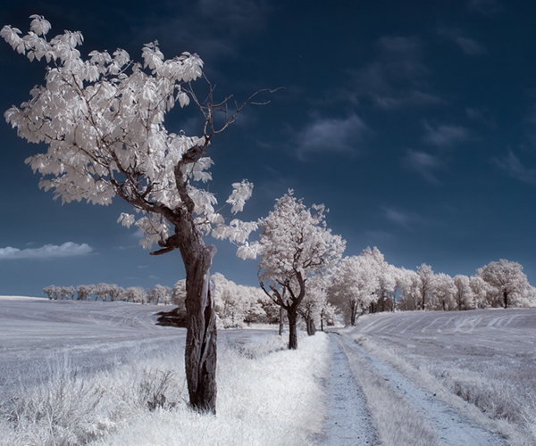 summer in infrared 45 Impressive Examples of Infrared Photography