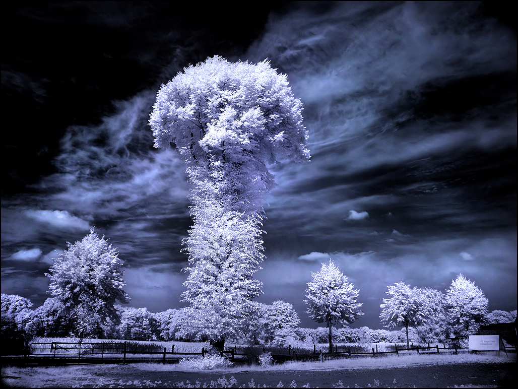 the mushroom tree infrared photography11 45 Impressive Examples of Infrared Photography
