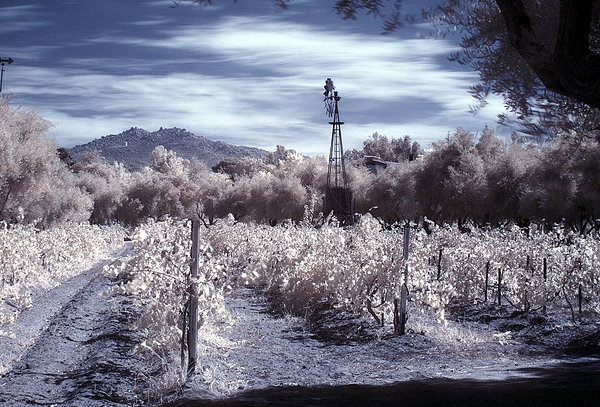 vineyard 45 Impressive Examples of Infrared Photography