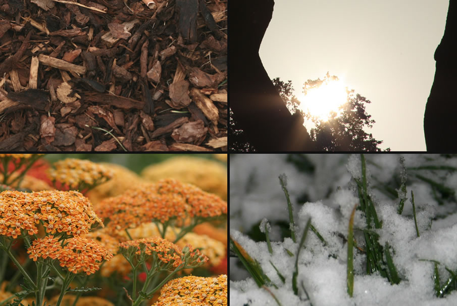 Photo Collage of Seasons