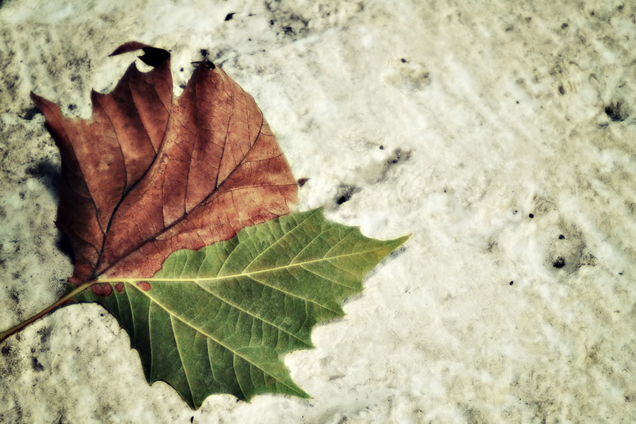 Seasons Change All the Time