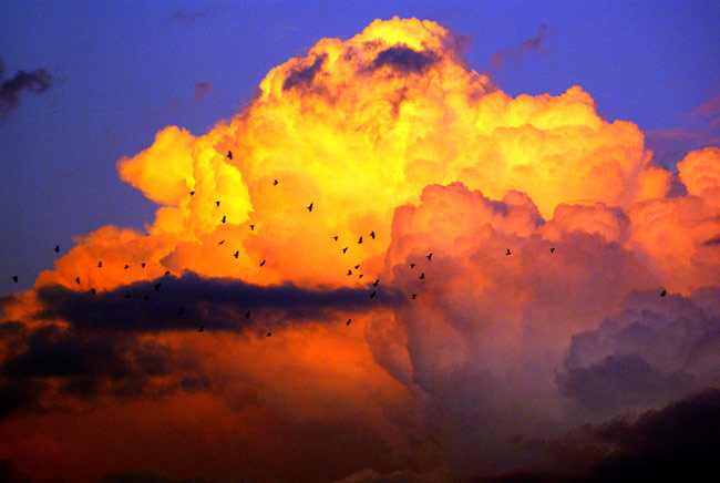 birds and clouds photography