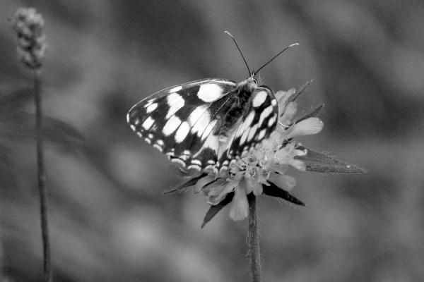 An Old Butterfly