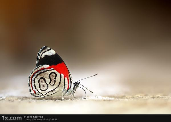 Number 8 Butterfly