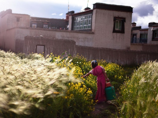 Girl With Pail, Tibet