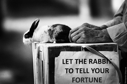 Let the rabbit to tell your fortune