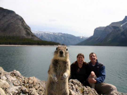 Squirrel Portrait, Banff