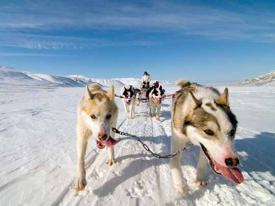 Dog Sled, Norway