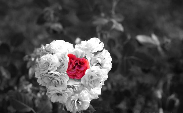 Heart Of White Rose With Red Rose In Centre