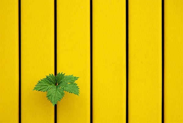 Low Yellow Green by Jul