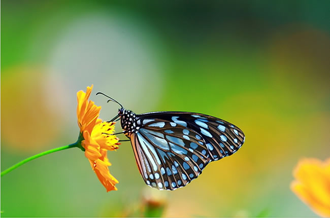 butterfly-pictures-20