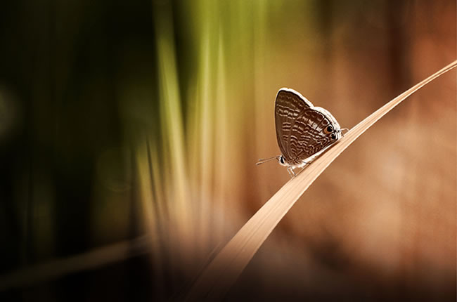 butterfly-pictures-21