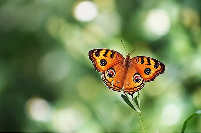 butterfly-pictures-24